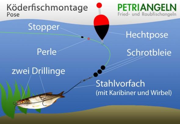 Köderfischmontage mit Pose
