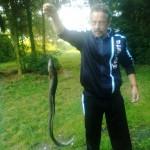 Raubaal (116 cm) aus dem Niedermöllricher Teich