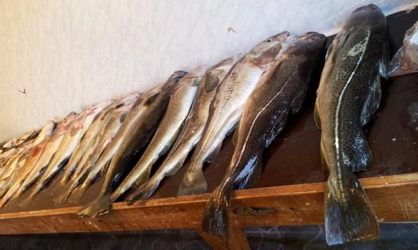 Fangergebnis in Norwegen