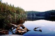 Schweden Glaskogen Naturreservat